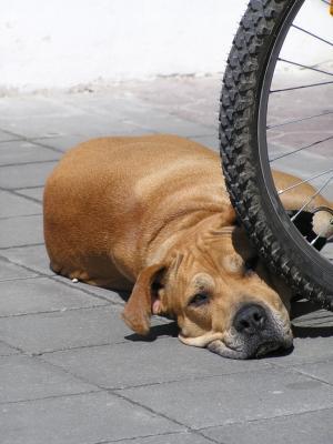 Fahrradfahren mit dem Hund – Ein Vergnügen für Mensch und Tier