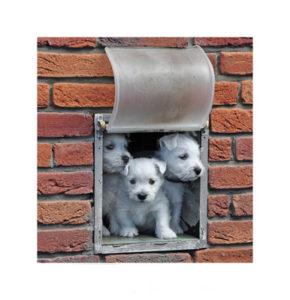 Gesunde Hundewelpen gucken durch die Tür