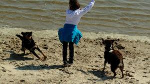 Kind spielt mit zwei Hunden