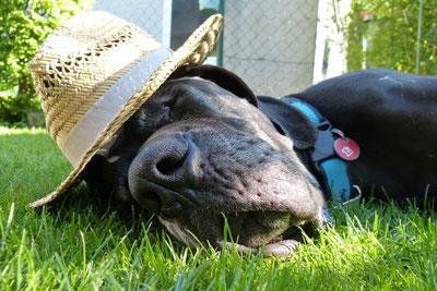 Wie kann ich meinem Hund in der Sommerhitze helfen?