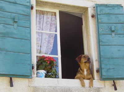 Hund in einer Hundepension