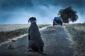 Hund auf einem Feldweg