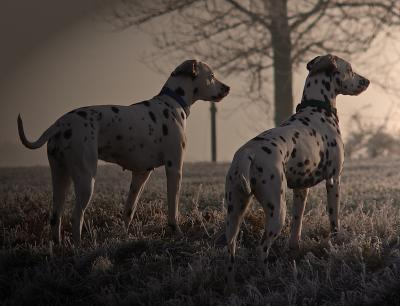 GPS-Tracking oder Peilsender für Hunde – Ist das sinnvoll?