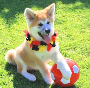 Welpe spielt mit einem Ball
