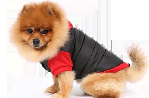 Spielzeuge für den Hund jetzt online kaufen auf www.spass-fuer-den-Hund.de