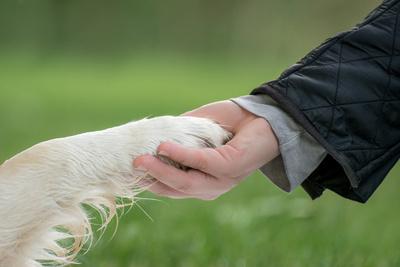 Hundekommandos – Die wichtigsten Kommandos auf einen Blick