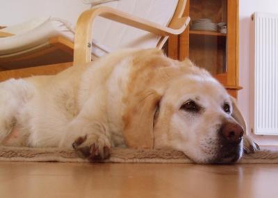 Wie berechnet man das Hundealter?