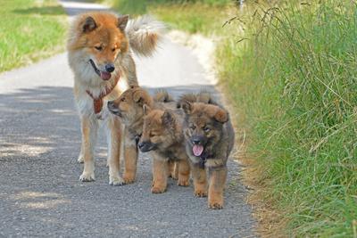 Läufigkeit bei Hunden – Diese Dinge muss man beachten