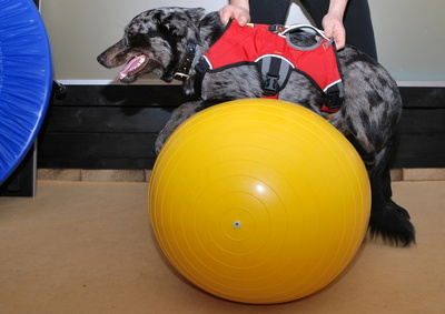Die Hundehaftpflichtversicherung – Wofür ist sie gut?