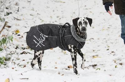 Brauch mein Hund eine Hundejacke im Winter?