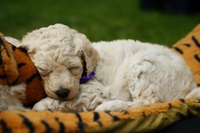 Hundeschlafsack – Ein Schlafsack für Hunde?