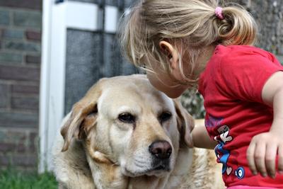 Regeln für Kinder beim Umgang mit dem Hund