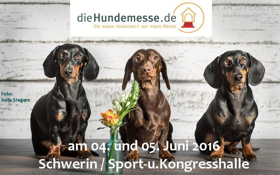 Erste Hundemesse in Schwerin