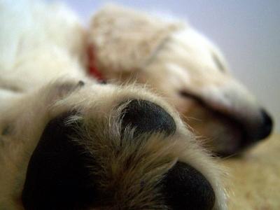 Wie schneide ich meinem Hund die Krallen?