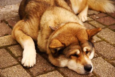 Was ist zu tun, wenn mein Hund erbricht?