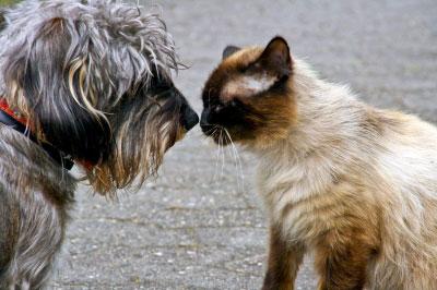 """Wie gewöhne ich meinem Hund das """"Katzen jagen"""" ab?"""