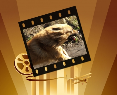 Dog TV – Über Sinn oder Unsinn?