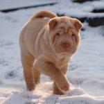 Auf welche Dinge muss ich beim Spazieren gehen mit dem Hund im Winter achten?