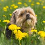Ist eine vegane Ernährung artgerecht für den Hund?