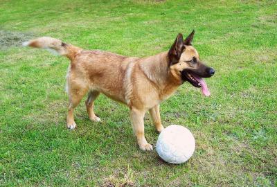 Wie kann ich meinen Hund fit halten?