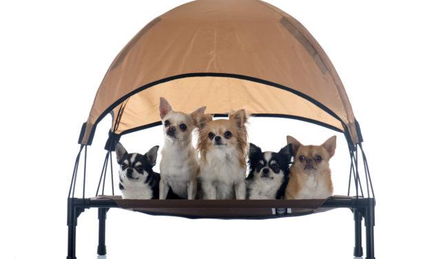 Die Hundeliege – Vor- und Nachteile