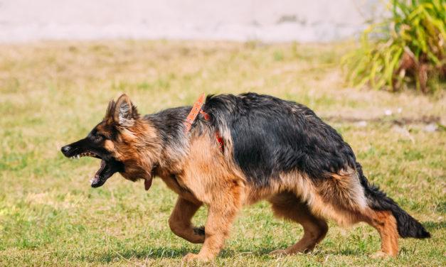Was mache ich wenn ein anderer Hund meinen Hund angreift?