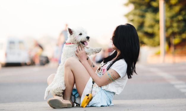 Wie gewöhne ich dem Hund das Anspringen ab?