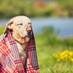 Ab wann ist eine Schwimmweste für Hunde sinnvoll?