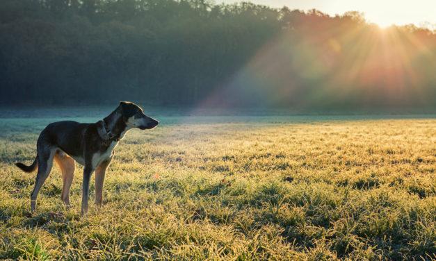Was kann ich tun, wenn ich einem entlaufendem Hund begegne?