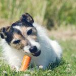 Detox für den Hund – ein neuer Trend oder doch sinnvoll?