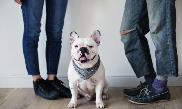 Rede mit deinem Hund – dein Hund versteht dich