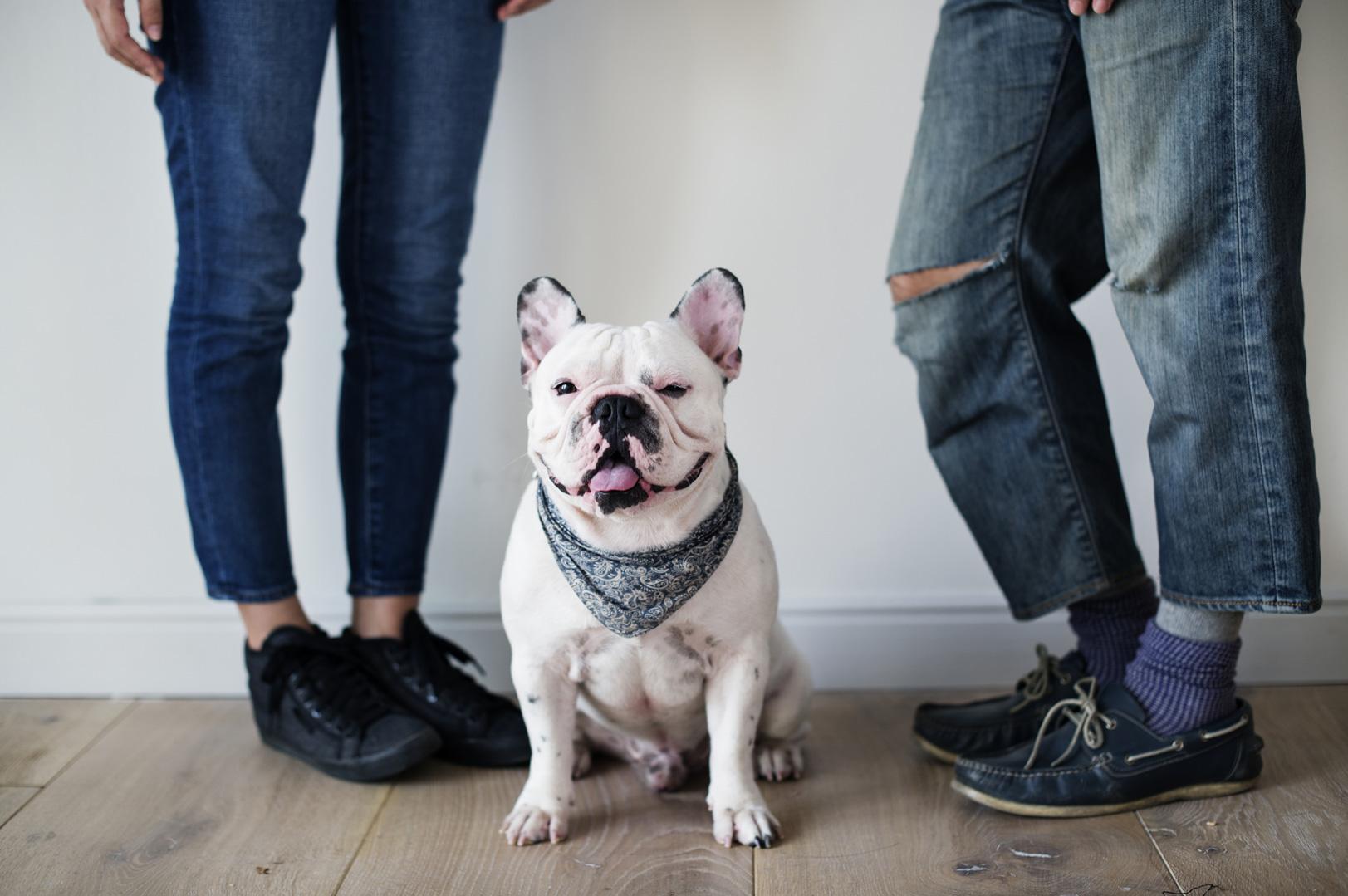 Mit dem Hund reden - Französische Bulldogge braucht Zuwendung